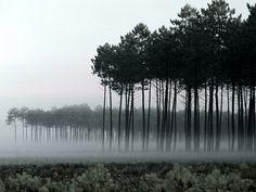 Beautiful misty trees!