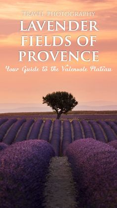Lavender Fields in Provence, France by The Wandering Lens a complete guide to the most photogenic fields!