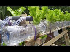 Hydroponics Setup, Hydroponic Grow Systems, Hydroponic Farming, Hydroponic Growing, Aquaponics Diy, Aquaponics System, Diy Plastic Bottle, Self Watering Planter, Bottle Garden