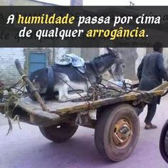 Funny Picture Of Meanwhile in Mexico Funny Images, Funny Photos, Funny Christian Memes, Frases Humor, Great Inventions, Meanwhile In, Vegan Animals, One Pic, Animals And Pets