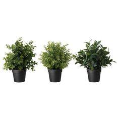 FEJKA Τεχνητό φυτό σε γλάστρα - IKEA
