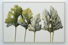 Gallery showing a selection of Fay Ballard's previous art works. Art Projects, Projects To Try, Growth And Decay, Gcse Art Sketchbook, A Level Art, Artist Gallery, Natural Forms, Herbs, Leaves