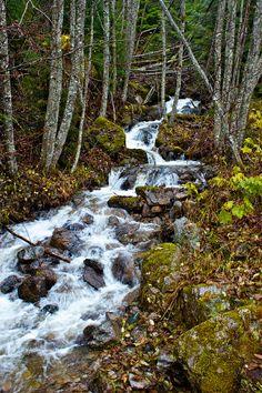 Forest PhotographyFine Art  Prints Mountain Spring by Photomom101, $25.00