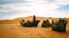 It took two flights covering three continents, a ten hour drive from Marrakech through the mountains and the black desert, and an hour and a half by camel caravan to...