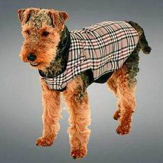L'hiver arrive...le manteau english style est parfait : http://www.ezoo.fr/manteau-english-style-karlie,fr,4,17075.cfm