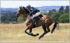 Cross Country Gallop, such a great formation, beautiful horse and what a lovely colour =)