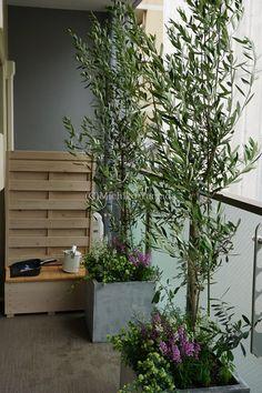京都市内の中心、新築マンションのベランダに大きめのコンテナを2基設置させていただきました。 目隠し効果にと大きめのオリーブをコーディネートしたので、...