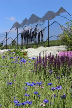 Wildflowers, ground covers and public art in Greeley, CO.