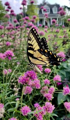 Proven Winners - Truffula™ Pink - Globe Amaranth - Gomphrena pulchella pink hot pink plant details, information and resources. Hot Pink Flowers, Cut Flowers, Globe Amaranth, Pink Plant, Proven Winners, Hot And Humid, Pink Garden, Life Photo, Plant Care