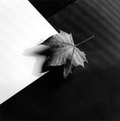 From Weinstein Gallery - Minneapolis, Robert Mapplethorpe, Leaf Gelatin silver print, 20 × 16 in Shadow Photography, Film Photography, Flower Photography, Patti Smith, Robert Mapplethorpe Photography, Still Life Images, Artist Biography, Gelatin Silver Print, Artwork Images