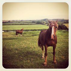 My friends horses, Rebel and JJ.