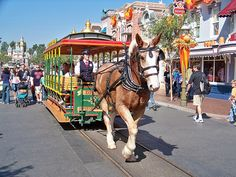main street vehicles, and the wonderful draft horses that pull them.
