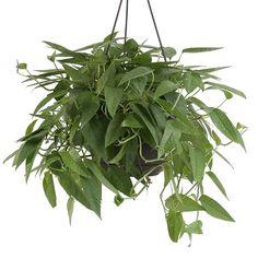 Magic Of Exotic Angel Plants