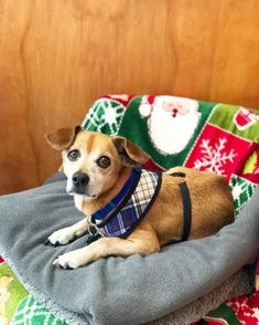 Every day is a holiday with Decker! If you've been looking for a dog that's the life of the party, you can stop looking – Decker's ready to meet you! Animal Rights, Adoption, Meet, Babies, Dogs, Party, Holiday, Life, Animals