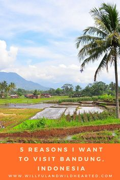 Interested in learning why I want to #travel to #Bandung, #Indonesia? I've written down a few reasons to spark your #wanderlust. Click here to read more or PIN this to your favorite #travel or #nature board to share the love! www.willfulandwildhearted.com
