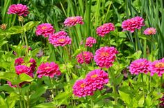 9 kerti virág, amit napos helyre is ültethetsz és még locsolni sem kell! - Bidista.com - A TippLista! Flower Beds, Home And Garden, Yard, Beautiful Roses, Gardening, Plants, Flowers, Gardens, Patio