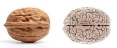 "Was it designed? Foods That Look Like Body Parts They're Good For ~The folds and wrinkles of a walnut bring to mind another human organ: the brain. And it's no surprise walnuts are nicknamed ""brain food."" I absolutely love this article. Read more. Food Nutrition Facts, Food Facts, Nutrition Chart, Nutrition Month, Fitness Nutrition, Healthy Tips, How To Stay Healthy, Healthy Eating, Healthy Foods"