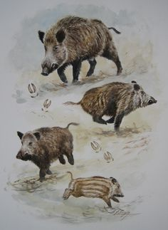 Dominique Pizon Boar Hunting, Hunting Art, Logo Animal, Hog Dog, Horse Anatomy, Duck Art, Wild Boar, Prehistoric Animals, Weird Creatures