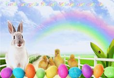 Easter Bunny Wallpaper: Easter Bunny HD Wallpapers For Desktop And iPhone, Easter Funny Bunny Images Pictures Photos Clipart, Happy Easter 2018 Funny Memes Quotes Sayings Funny Easter Pictures, Funny Easter Bunny, Easter Bunny Pictures, Easter Bunny Eggs, Bunnies, Easter Bunny Colouring, Easter Egg Coloring Pages, Passover Images, Ostern Wallpaper