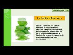 ▶ Plantas medicinales para la diabetes | Tratar con plantas medicinales para la diabetes - YouTube