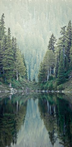 Mirrored forest at Retezat National Park in Hunedoara county, Romania