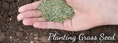 Planting Grass Seed in the South from Pike Nurseries / Pike Nurseries