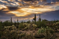 Sunset Photograph - A Beautiful Sonoran Desert Evening by Saija Lehtonen