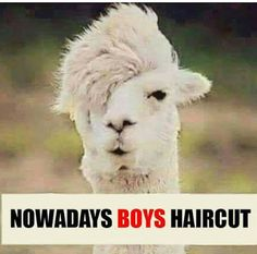 Desi Humor, Desi Jokes, Image Of The Day, Funny Thoughts, Boy Hairstyles, Love Photos, Color Of Life, Funny Posts, Funny Images