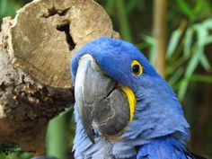 I love this close up shot that I got. Fort Worth Zoo, Close Up, Parrot, Bird, My Love, Animals, Parrot Bird, Animales, Animaux