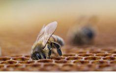 www.propolis-etc.ca Beekeeping supplies Toronto-Guelph-Ottawa