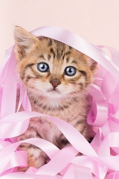 Pretty kitten!