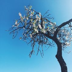 Under the almond tree blossom. Killing an hour... or two. | | (Because you asked, had to wait for the insurance office to reopen after lunch. Still no money. Accident 2 months+ ago.) | #patiencemydear #notmybestquality #carless #springiscoming #foreversunday #almondtree #mrbluesky
