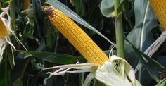 Next-generation agriculture: Seed and biosafety