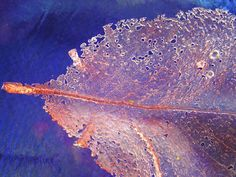 Lovely pate de verre glass work by Judith Bohm-Parr. I'd love to move on to pate de verre.