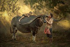 Thailand kid farmer sleeping happily. by Jakkree Thampitakkul on 500px