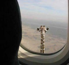 When I was going to Africa as a 5 year old this was the exact thing I had in my mind.. ♥ I became very disappointed..