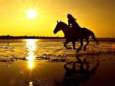 Paardrijden is mijn sport. Ik heb nog nooit een strandrit gereden. maar over 1 jaar mag ik met mijn moeder een strandrit gaan rijden. je moet alleen 10 zijn.