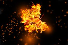 Fire Butterfly. Thank you Bud