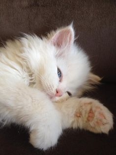 This kitten is so cute and beautiful