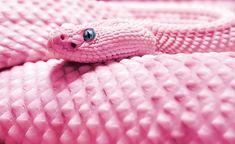Pink snake | Tumblr