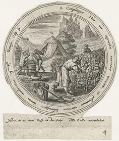 Crispijn van de Passe (I) | Noach legt een wijngaard aan, Crispijn van de Passe (I), Philips Galle, 1580 - 1588 | Noach was landbouwer en legde als eerste een wijngaard aan. Op de voorgrond worden druiven geplukt en geperst. Op de achtergrond de tent van Noach. De voorstelling is gevat in een cirkelvormige omlijsting met een randschrift in het Latijn.