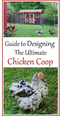 Thorough and organized, this guide will help you design the ultimate chicken coop: convenient for you, and spacious and comfortable for the birds. Chicken Coop Plans, Building A Chicken Coop, Diy Chicken Coop, Chicken Ideas, Keeping Chickens, Raising Chickens, Backyard Farming, Chickens Backyard, Perfect Chicken