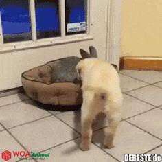 Geh von meinem Bett runter!