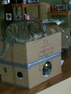 Homemade cat toy: 2 boxes taped together with holes to peep and play through!