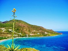 Turtle Beach St Kitts Picture By Ricky Pereira Pictures