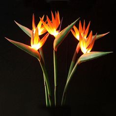 bird of paradise boutonniere - Google Search
