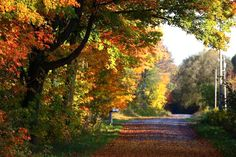 12 Breathtaking Places To View The Fall Colours In Ontario Expedia Travel, Couples Vacation, Peterborough, Ontario, Travel Guide, Things To Do, Tourism, Country Roads, Backyard
