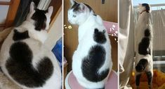 I Just Can't Get That Cat Off My Back   Love Cute Animals  #cats