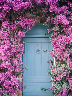 We were amazed by the blooming Bougainvillea in France! Photographed by Lucy Cuneo. See more at http://lucycuneo.com/walls-of-bougainvillea/