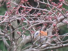 I can't identify this bird. I took this photo in Japan on Feb 12 2016.